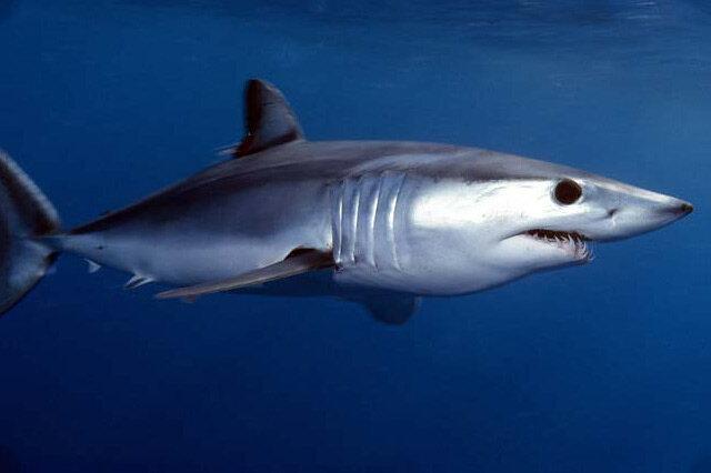 世界十大鱼类速度排名 世界十大游泳最快的鱼 各大鱼类时速排行