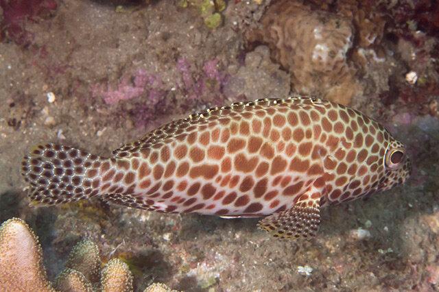 最好吃的十大海鱼 吃海鱼的益处 最美味的海鱼盘点