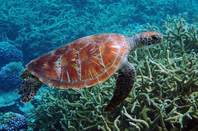 十大寿命最长的海洋动物 海洋动物谁的寿命最长